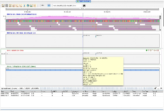 Viewing SNPs in the Strand NGS Genome Browser